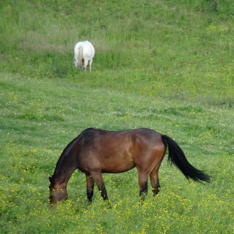 Equitation éthologique à Lyon
