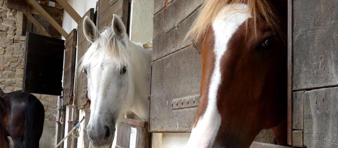 portrait-de-chevaux-dans-box-002